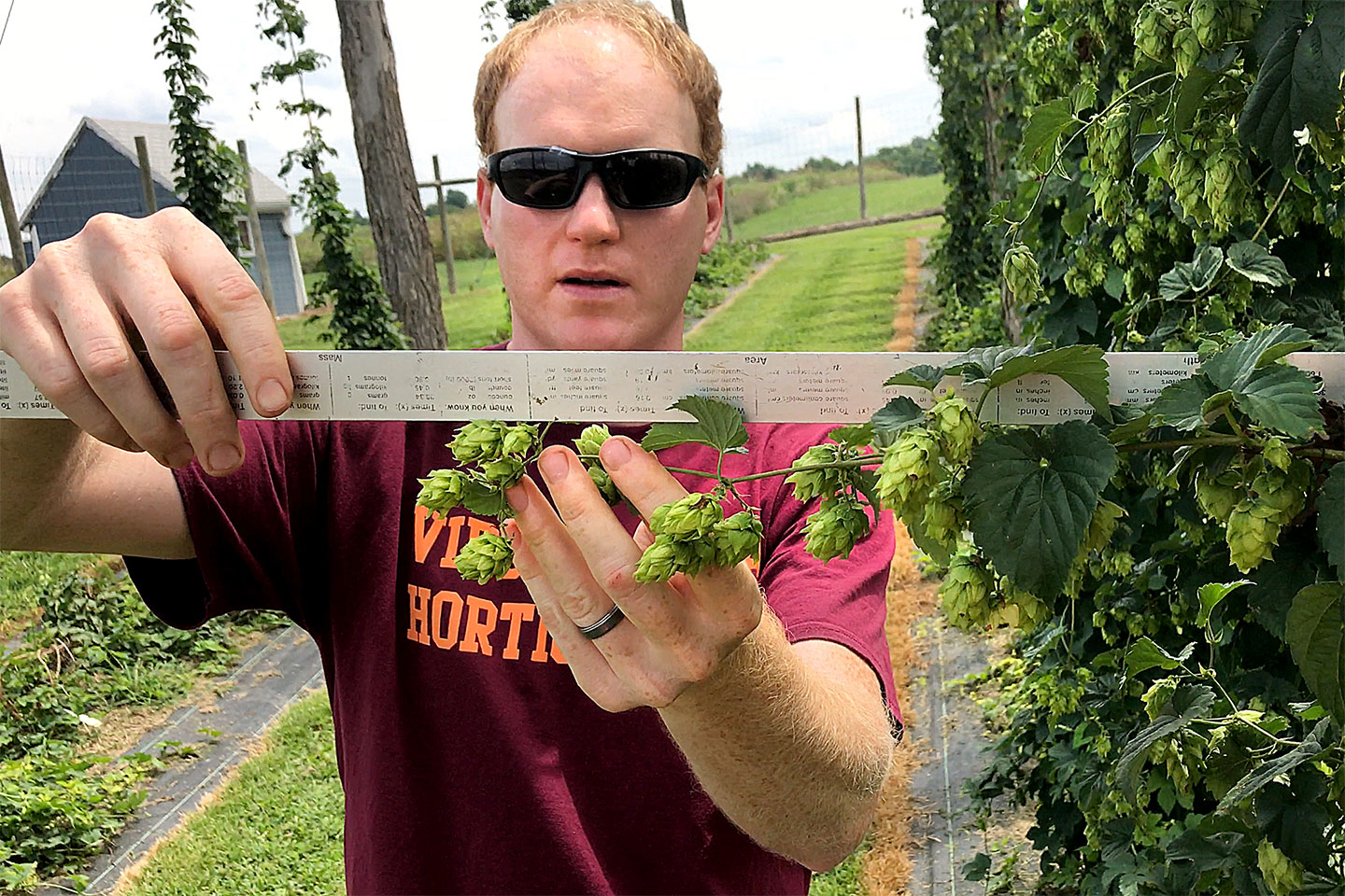 Virginia Tech researcher studying hops